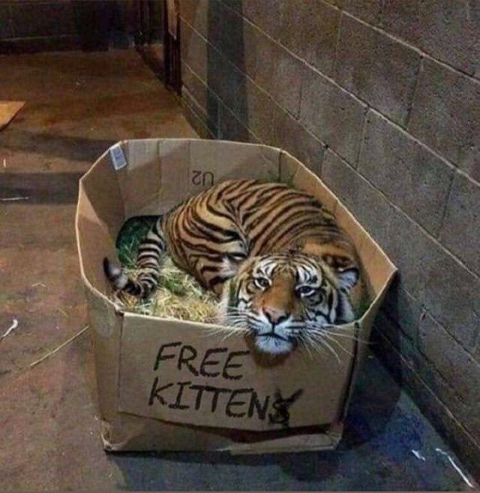 fun-kittens