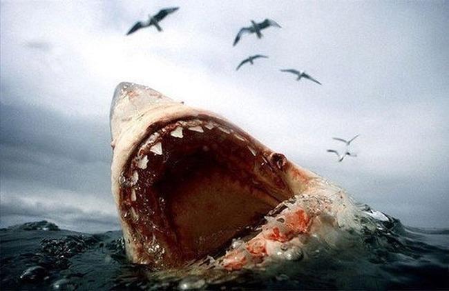film-jaws