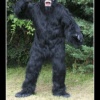 Gorila warfare