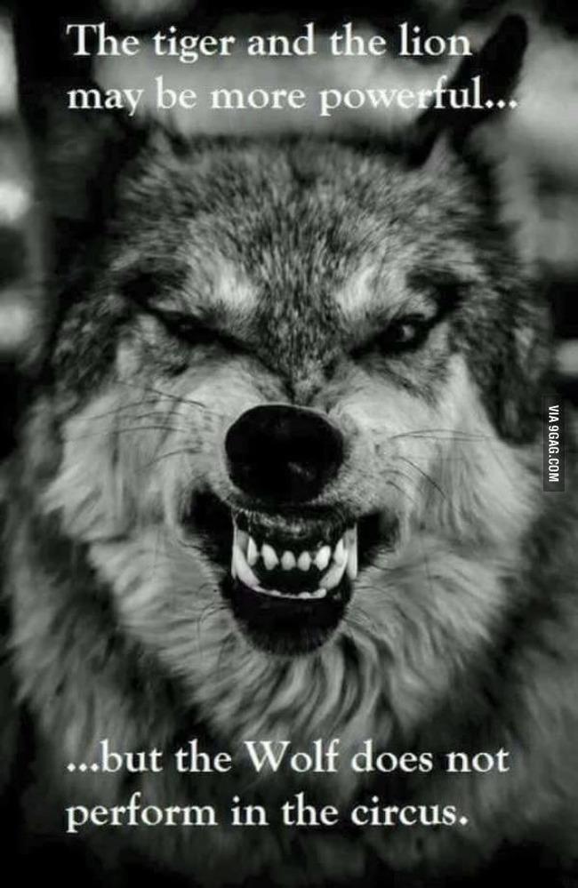 fun-wolf