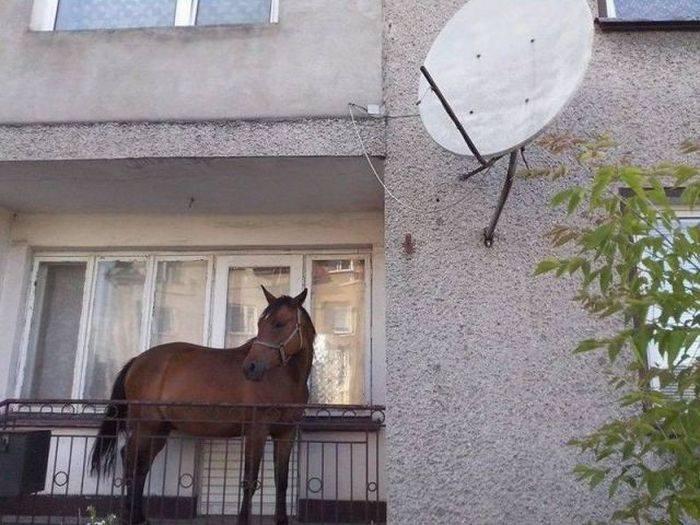 calul-balcon