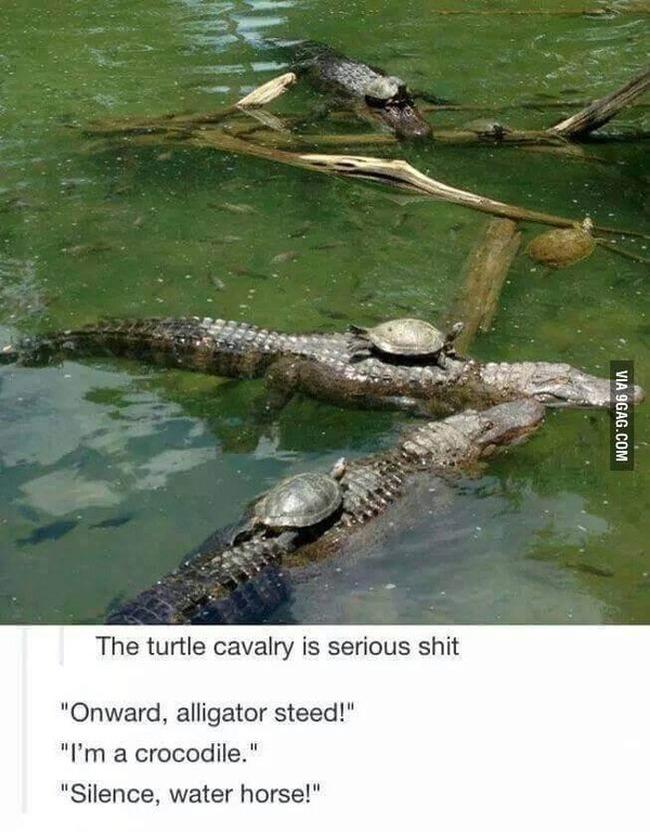 fun-turtle-cavalry