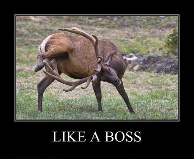 like.a.boss