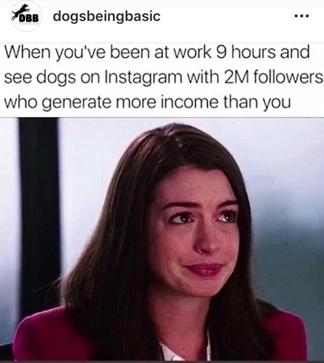 fun-caini-instagram