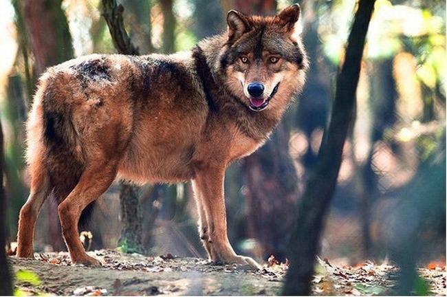 doggy-11