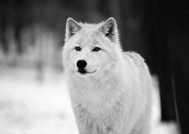 doggy-2