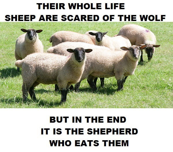 fun-sheep