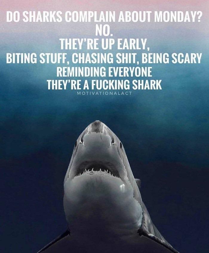 fun-shark