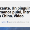 new-media-pinguin
